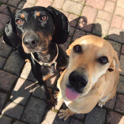 Josie & Reese - Plainfield