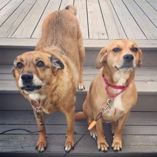 Mia & Layla - Romeoville